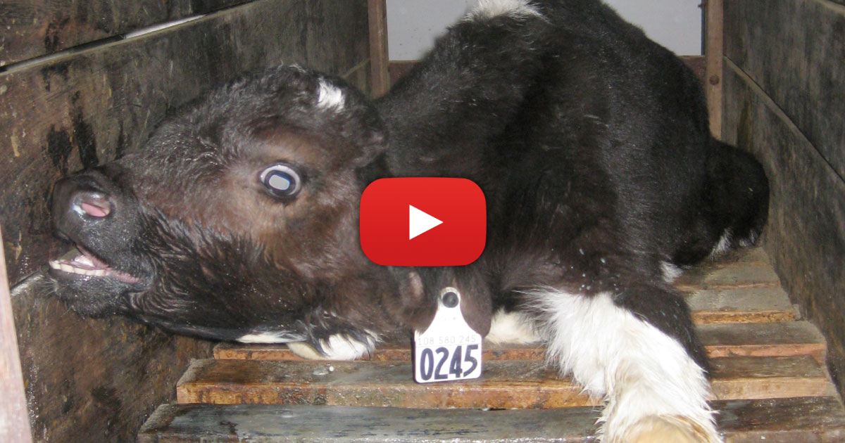 The last few seconds of this video will leave you speechless. Watch now.